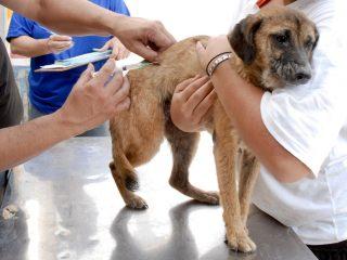 Associação de Proteção aos animais promove Mutirão de Vacinação gratuita!
