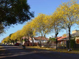 Um olhar para Arborização Urbana