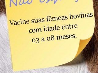 Chegou a hora de vacinar contra a Brucelose