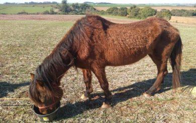 Poder Executivo emite notificação por égua abandonada há 60 dias