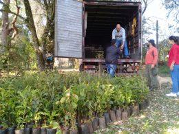 Não-Me-Toque recebe 1000 mudas de árvores nativas do projeto Coprel Ecologia